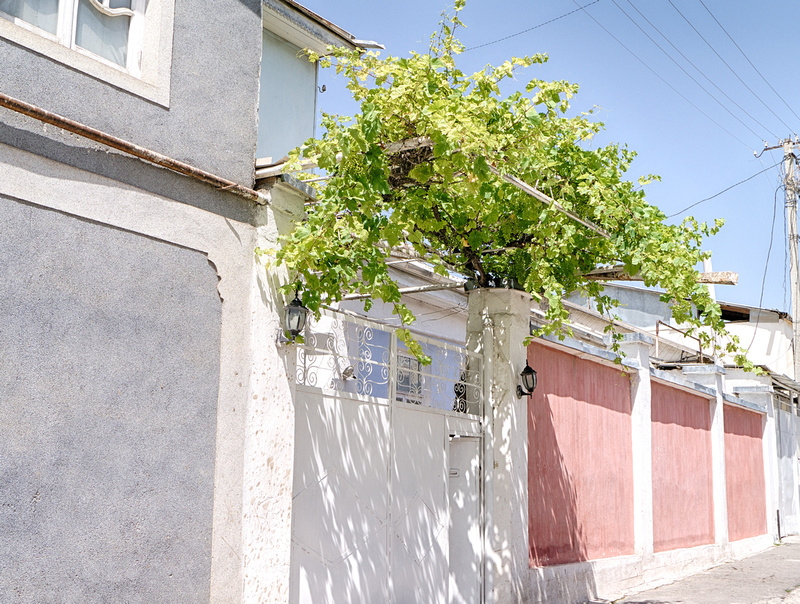 Grapevines give shade over a sidewalk in Dushanbe, Tajikistan.